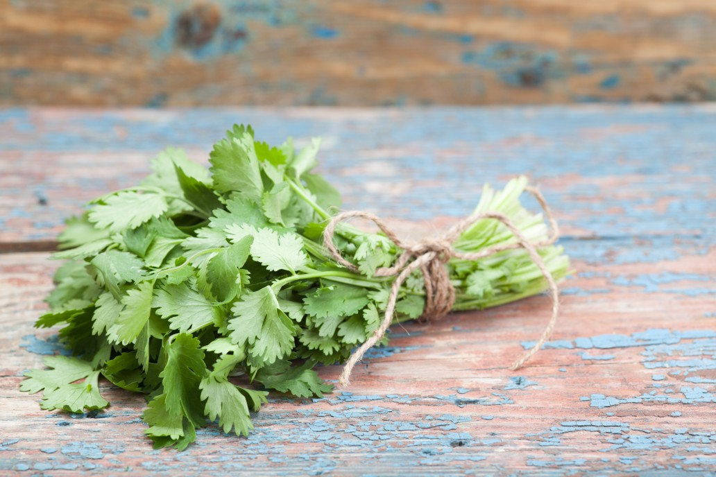 Using Cilantro To Detox From Heavy Metals